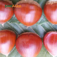 High Quality Bulk Chestnut In China