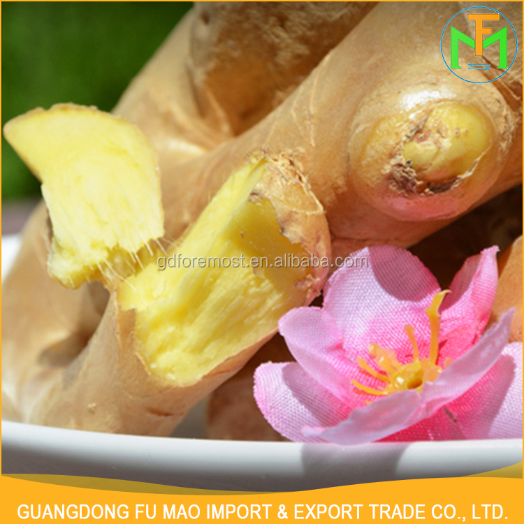 Export Organic Yellow Fresh Mature Shandong Zingiber Best Quality Super Big Ginger For Sale