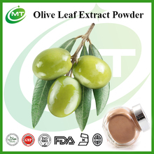 10% Oleuropein Powder Olive Leaf Extract Powder