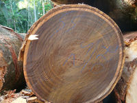 Special and Noble timber from Braziliam Forest