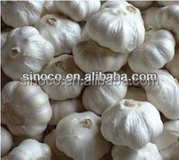 white garlic china supplier garlic