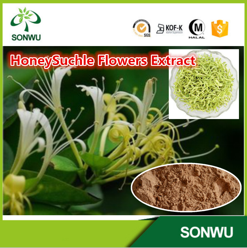 Lonicera Japonica Extract, Honeysuchle Flowers Extract,Honeysuchle Extract