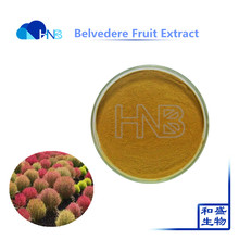 sample free Bassia scoparia extract belvedere fruit P.E. powder