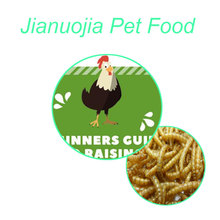 Bulk Dried Mealworms for Poultry Fish Bird