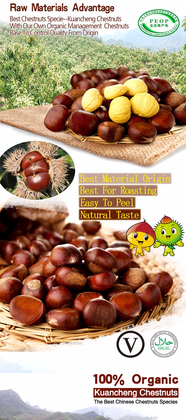 Natural Sweet Easy To Peel Hebei Fresh Chestnuts