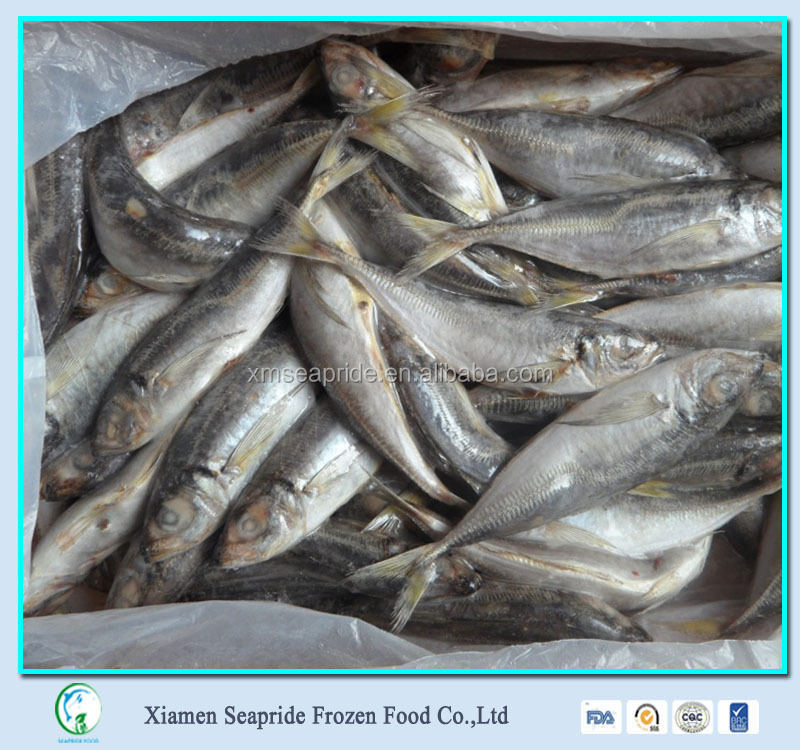 Seafood Frozen Horse Mackerel,Pacific Mackerel