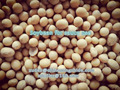 China Soybeans for Sauce Use, 2016 corp Soybeans, Healthy NON-GMO