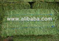 High Quality Alfalfa hay for sale