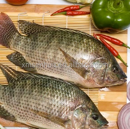 Quick frozen fresh live tilapia from China