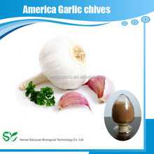 Natural America Garlic Chives Extract Powder with Best Price