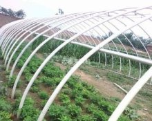 single span/multi span plastic film agricultural greenhouses/vegetable & fruit greenhouses