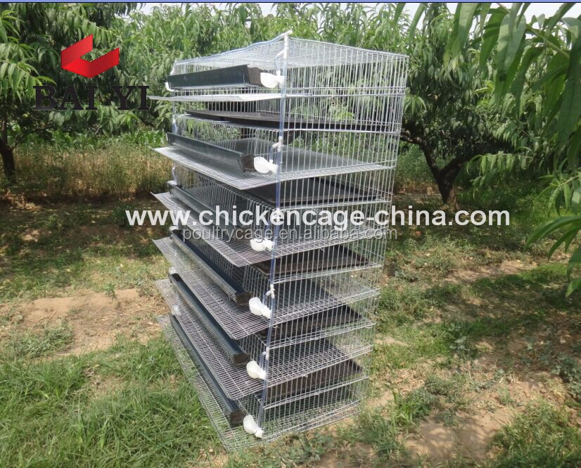 Quail Laying Cage Automatic And Quail Farm Cage For Sale