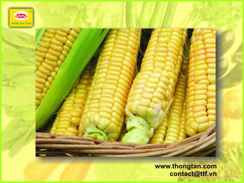 Sweet corn in can 30 Oz from Vietnam
