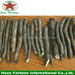 Strong adaptability Paulownia Tomentosa roots cutting for breeding