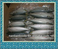 new season frozen pacific mackerel 300-500g from ningbo