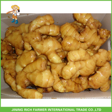 Anqiu Ginger Buyer And Exporter
