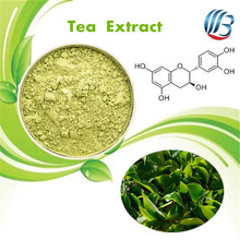 LanBing supply high quality camellia sinensis leaf extract sweet tea extract theaflavin