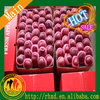 Fresh red delicious apple Hot sales red huaniu apple
