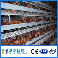 Bottom price automatic chicken cage system