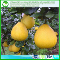 best GMP factory wholesale grapefruit seed extract/grapefruit seed extract powder