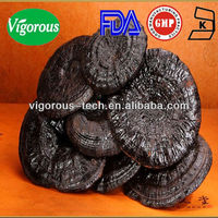 GMP factory natural bulk reishi mushroom extract triterpenes