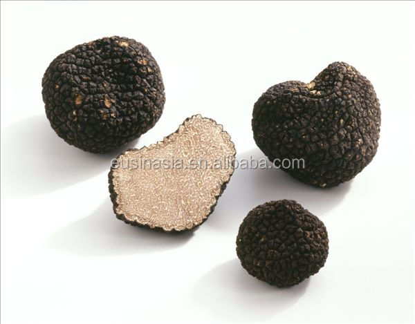 China Wild fresh Black truffle Mushroom for sale