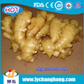2017 Air dried ginger factory supply