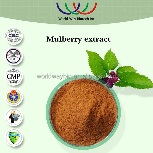 Mulberry leaf extract free sample Chinese herb medicine good for heart 1%~5% DNJ 20% polysaccharides mulberry leaf extract