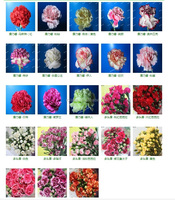 Wholesale Wide varieties new coming Fresh Cut flower carnation
