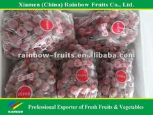 Global Grpaes/fresh grapes price