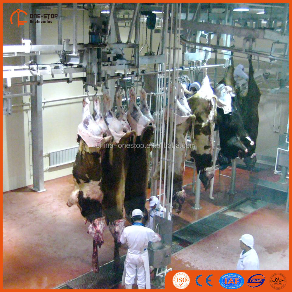 250 Cattle Day Halal Meat Processing Humane Cattle Abattoir