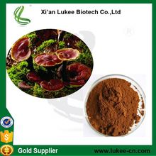 Reishi mushroom extract powder wholesale Natural reishi mushroom extract powder where to buy reishi mushroom spores