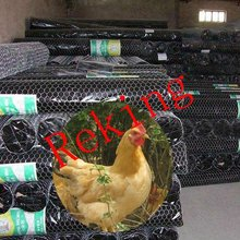 Steel/galvanized chicken coop wire netting