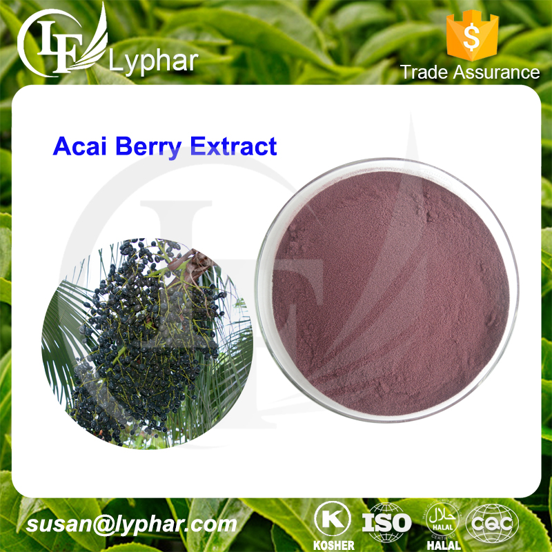 Manufacturer Supply Acai Berry 4:1