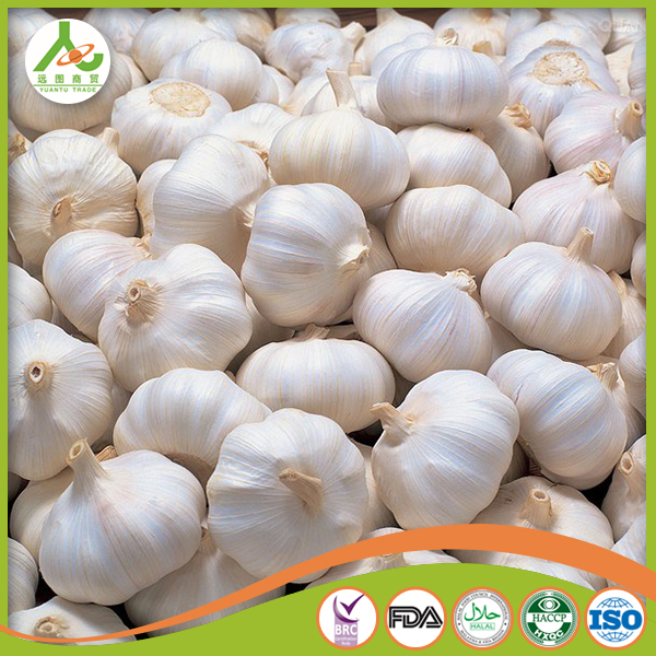 The best fresh garlic from China high quality and lower price