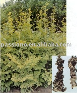 Bulk natural Black Cohosh Extract 2.5%, herbal extract at lowest price