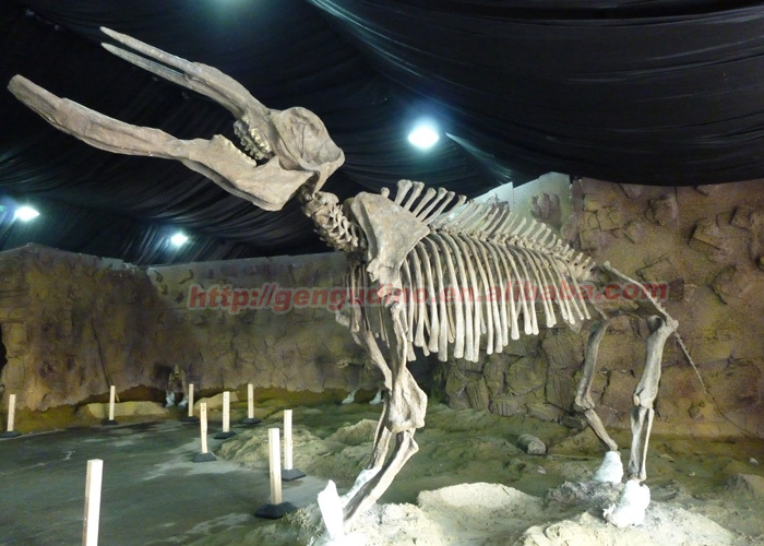 animal fossil replicas,mammoth skeleton