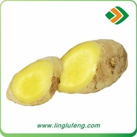 Dehydrated ginger import Chinese mature ginger