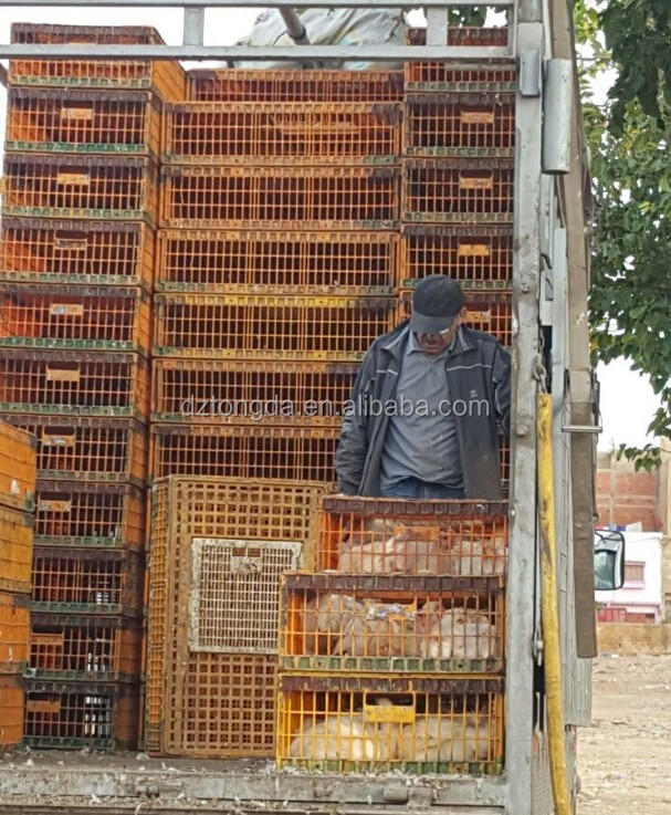 Professional live chicken transport box with CE certificate transport poultry cage/box/crats