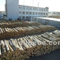 White Birch Logs Latvia Origin