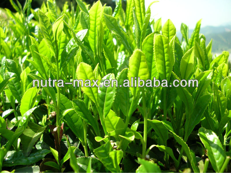 2014 decaffeinated green tea extract price - We are NutraMax Supplier !