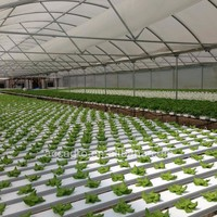 Green House NFT Hydroponic Growing System