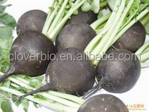 10:1 natural black radish extract powder