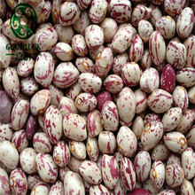 Common Cultivation Type Healthy Dry Pinto Organic Sugar Bean