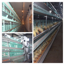 2017 uganda poultry farm automatic chicken layer cage for sale in phillppines with free poultry farm house design