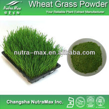 (Kosher & Halal) Wheat Grass Juice P.E. 4:1 10:1 by TLC