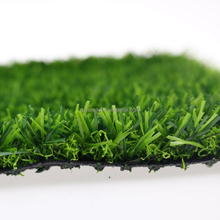 lawn grass vetiver grass bermuda grass for sale