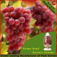 High Quality Grape Seed Dry Extract 95% OPC