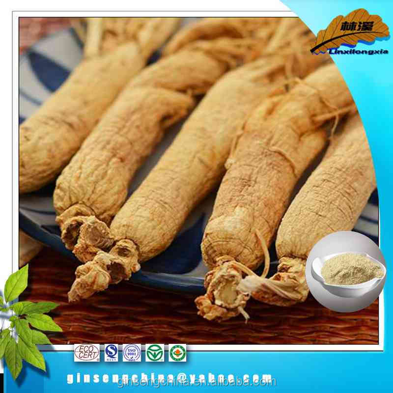 Hot sales indian herb ginseng