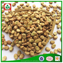 China manufacturer wholesale big size dry broad bean faba bean fava bean